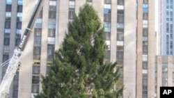 Tourists and native New Yorkers alike flocked to Rockefeller Center to see the 2010 Christmas tree being raised.