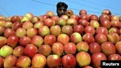 پاکستان کا زیر انتظام کشمیر سیب، خوبانی اور آڑو کی پیداوار کے لیے مشہور ہے۔ (فائل فوٹو)