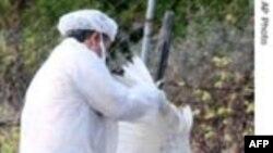 Việt Nam tạm ngưng kế hoạch tiêm chủng cúm gia cầm trên cả nước