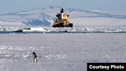 Ледокол у берегов Антарктиды.