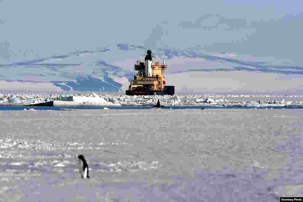 IceCube menggunakan pemecah es untuk mengirim peralatan berat dari Swedia ke pesisir Antartika. (Chadden Hunter)