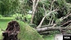 Yıxılmış ağac