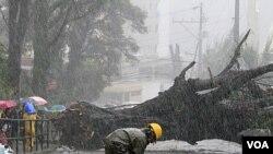 Seorang pekerja memeriksa kerusakan listrik akibat pohon tumbang saat topan Nanmadol melanda kota Baguio, timur Manila, Filipina (27/8).