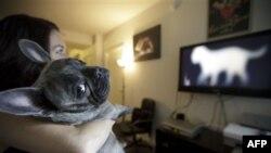تأسيس کانال تلويزيون کابلی مخصوص سگها در کاليفرنيا
