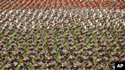 دا افغانان شام ته ځکه ليږل کيږي ترڅو هغوي دايراني ځواکونو اؤ حزب الله دجنګيالو سره په ګډه دصدر بشارالاسد په ملاتړ مخالفينو سره وجنګيږي.