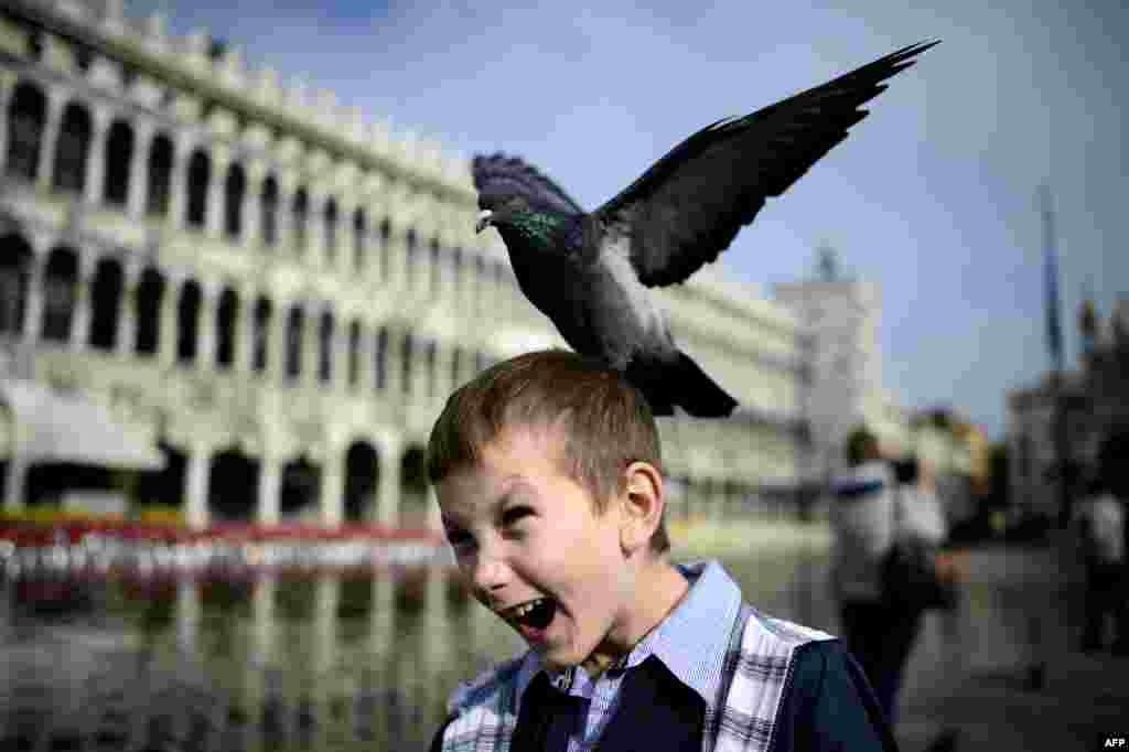 A pigeon lands on a boy's head in the flooded Piazza San Marco (Saint Mark's Square) in Venice, Italy. Saint Mark's Square, as the lowest point of Venice, is always the first place to be flooded.