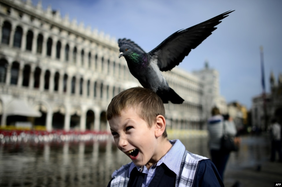 chinese kid grabs pigeon head