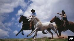 Cowboys lassoing horse