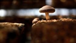 Quiz - Mushroom Hunting Gains Popularity in US