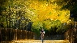 A woman walks in a park at Vorobyovy Hills in western Moscow on October 6, 2021.