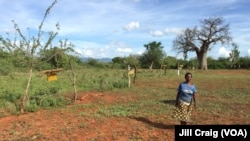 Zone de Taita-Taveta, Kenya, le 19 avril 2016.