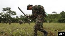 Боливийские солдаты уничтожают плантацию коки. Март 2011г.