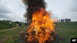 U.N. and Liberian Drug Enforcement Agency officials destroy a stash of marijuana in Paynseville, near Monrovia, Nov. 15, 2013.