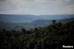 ایمزان برساتی جنگل 22 لاکھ مربع میل پر پھیلا ہوا ہے۔