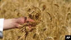 عالمی نظام خوراک میں تبدیلوں کی ضرورت