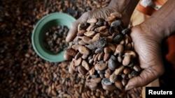 Un ouvrier prend en main des graines de cacao en Côte d'Ivoire, le 29 janvier 2016.