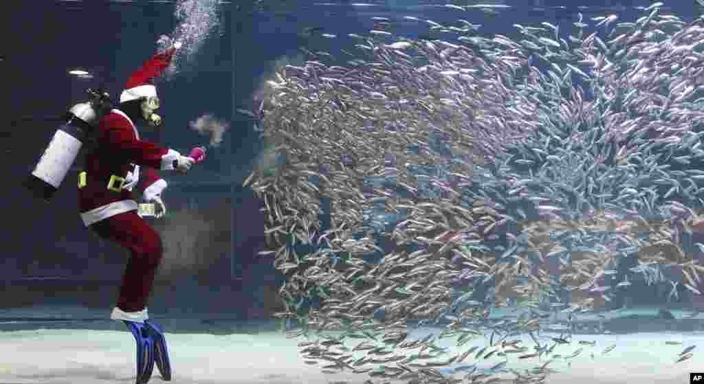 A diver dressed in a Santa Claus costume feeds sardines at the Coex Aquarium in Seoul, South Korea.