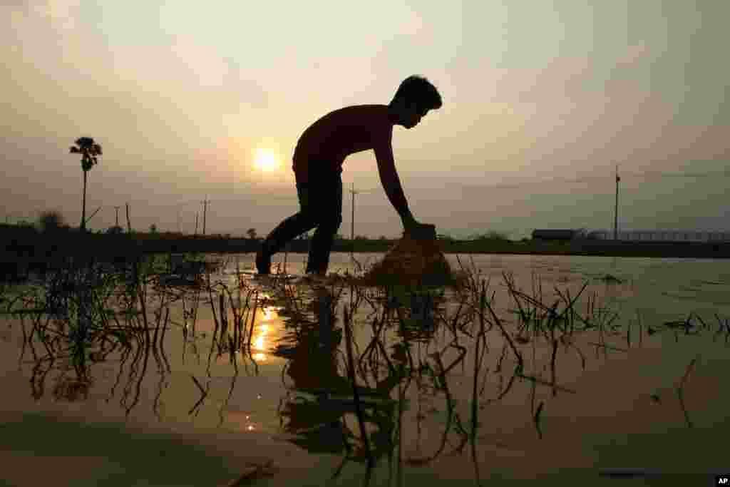 Seorang pria Kamboja menangkap ikan di desa Chak Chrouk, pinggiran ibukota Phnom Penh.