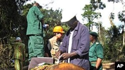 Engineers of the Cameroonian Ministry of Forestry and Wild Life controlling a timber company in the Ambam region, Oct 2007 (file photo)