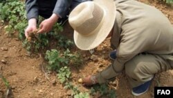 지난 2012년 유엔 식량농업기구가 방문한 북한 황해도의 이모작 재배지. (자료사진)