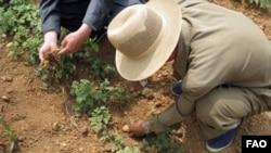 FAO 관계자가 북한 황해도의 이모작 재배지를 방문해 조사하고 있다.