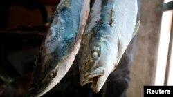Cá chết ở một cơ sở đông lạnh ở Hà Tĩnh vào tháng 4/2016. Một chuyên gia luật của Mỹ vừa cảnh báo hải sản nhập từ Việt Nam có thể nhiễm độc sau thảm họa môi trường biển do Formosa gây ra.