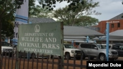 The Department of Wildlife and National Parks is expected to be the licensing authority. (Mqondisi Dube/VOA)