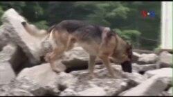 Chó được huấn luyện đặc biệt giúp cứu người trong thiên tai