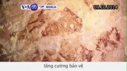 Chính quyền Indonesia tăng cường bảo vệ bức tranh hang động (VOA60)