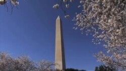 美国万花筒: 普利策奖公布得奖名单;华盛顿樱花季