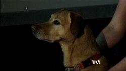 สุนัขรับรู้ความรู้สึกของมนุษย์จากการแสดงสีหน้า