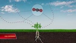 Tác động sâu xa của biến đổi khí hậu tới cây trồng và con người