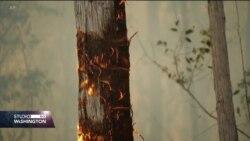Australija: Sve više požara pod kontrolom