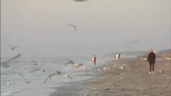绿色故事系列:太阳能卫星定位系统保护濒危鸟类