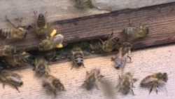 Bees Are Carrying Pesticides Into Most of the World's Honey