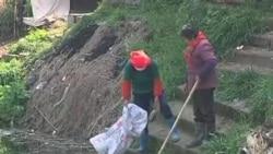 黄浦江死猪愈万,居民生活倍受影响