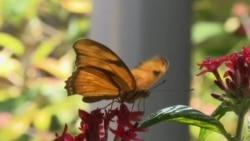 Triển lãm bướm tại Viện bảo tàng Smithsonian