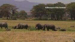 坦桑人驱赶大象办法多,鞭炮辣椒安全套