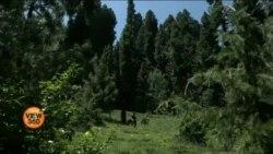 کیا کاربن جذب کرنے کی صلاحیت جنگلات کو آمدنی کا ذریعہ بنا سکتی ہے؟
