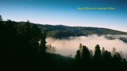 «National Parks Adventure» покажет миру красоту Америки