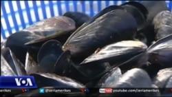 Mundësitë e eksportit për midhjen e Butrintit