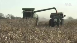美農業部證實中國加大美國大豆採購