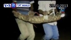 Hàng ngàn cá sấu xổng chuồng ở Nam Phi (VOA60)