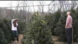 Ці американські традиції пов'язані із різдвяною ялинкою можуть здивувати. Відео