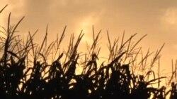 美国中西部农民担忧EPA乙醇标准变化