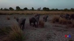 Le parc national de la Pendjari reprend vie au Bénin (vidéo)