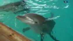 پروژه ۴ ساله پژوهشگران سوئدی: رمزگشایی زبان دلفین ها