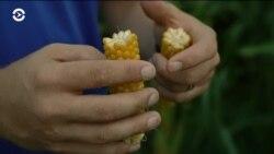Как делают попкорн