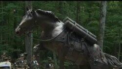 2013-07-25 美國之音視頻新聞: 韓戰的英雄馬雕塑在美國揭幕