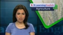 Social Media Helps Farmers